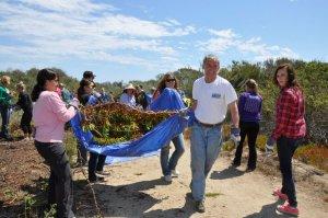 Harbor Wetlands Restoration