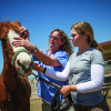 Veterinary interns get head start