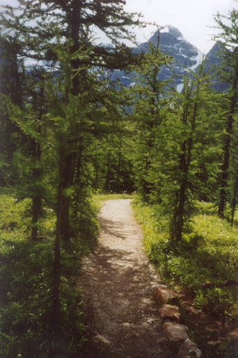 Picture of Larch Valley trail