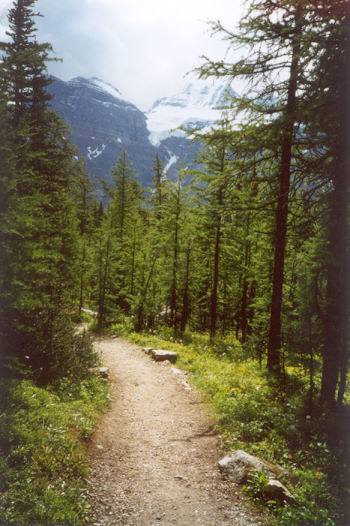 Picture of Larch Valley