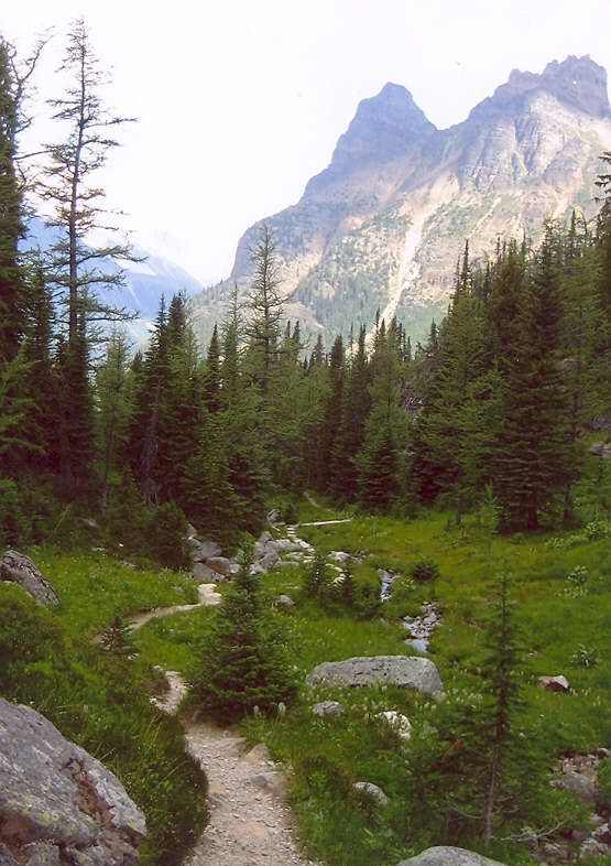 Picture of Opabin trail