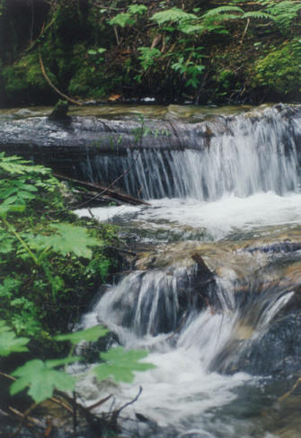 Picture of Lower falls, Mt. Revelstoke