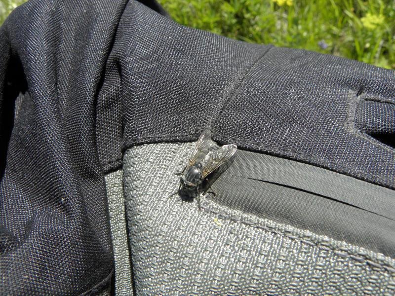 Picture of Horsefly