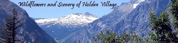Wildflowers and Scenery of Holden Village